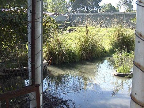 Casas inundadas de aguas servidas en Bella Italia