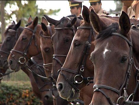 MGAP confirma que enfermedad que afecta a caballos es Gripe A