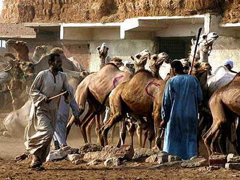 Militares uruguayos sitiados por temible tribu beduina en Sinaí