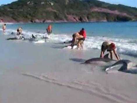 Turistas salvan a decenas de delfines encallados en Río