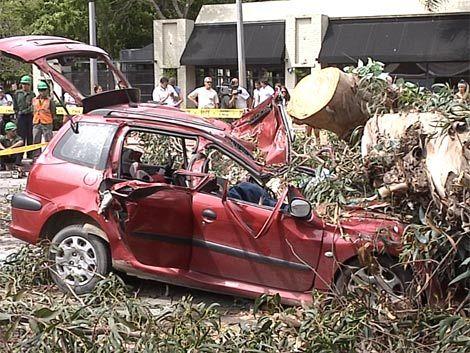 IM pidió informe de obras al Carrasco Lawn por árbol caído