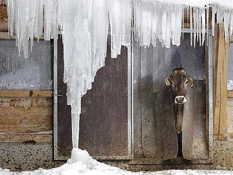 Al menos 139 personas murieron por la ola de frío polar en Europa
