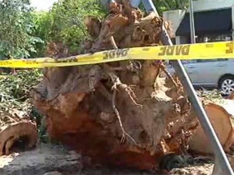 Justicia investiga muerte de mujer aplastada por un árbol
