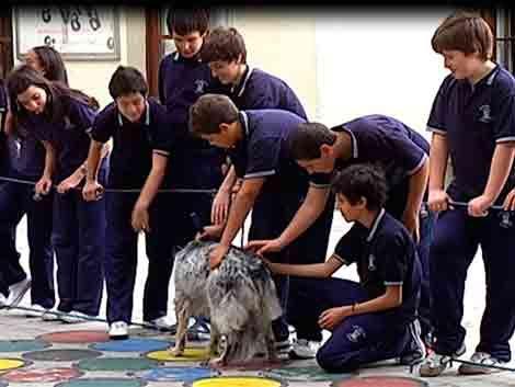 Enseñan a alumnos sobre cuidados de animales tras muerte de perra
