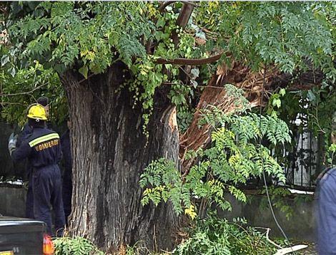 Tormenta dejó árboles caídos en toda la ciudad y techos volados