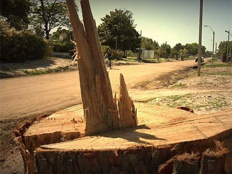 Tala indiscriminada de árboles deja sin sombra a la costa canaria
