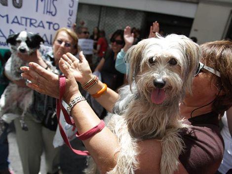 Maltrato animal: alarma pública decidió internación en INAU