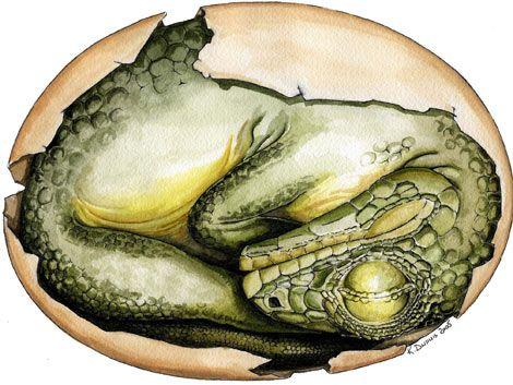 Recuperan tres huevos de dinosaurio enano que habían sido robados