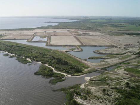 Montes del Plata pagará U$S 4 millones por impuesto a la tierra
