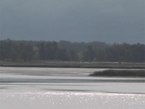 Advierten contaminación en la Laguna del Diario