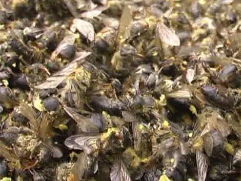 Cerca de 500 colmenas envenenadas en Rocha