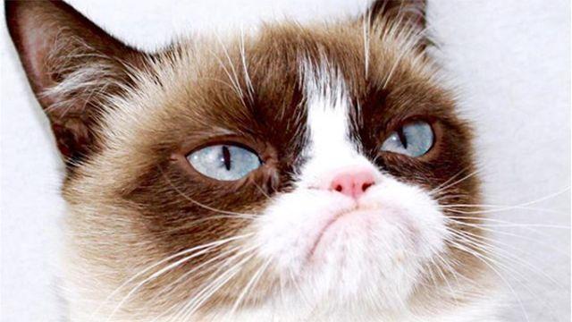 La gata más popular de las redes ganó un juicio por 800.000 dólares