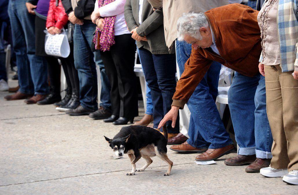 Murió Manuela, la perra de Mujica y Lucía Topolansky