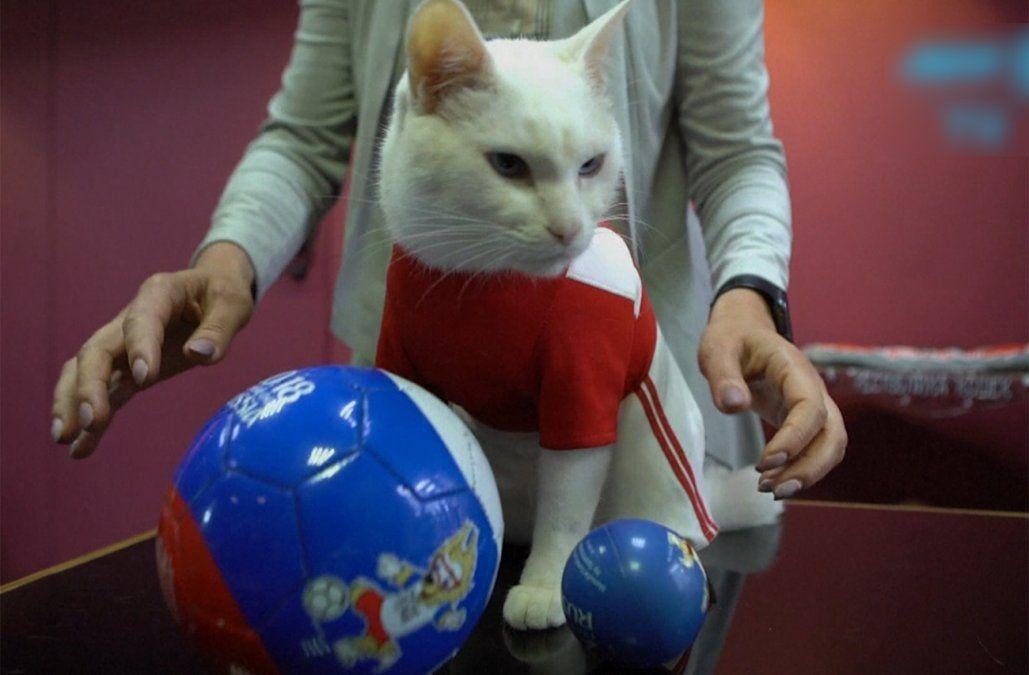 El gato Aquiles intentará emular al pulpo Paul como pronosticador en Rusia