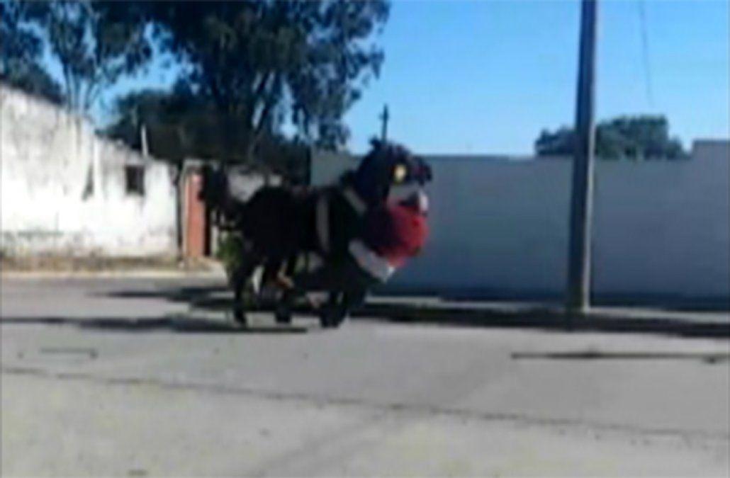 Caballo desbocado embistió a un hombre y luego a una moto en Rocha