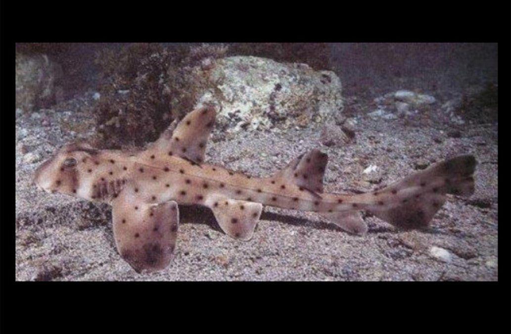 Robaron un pequeño tiburón; los descubrieron por torpes