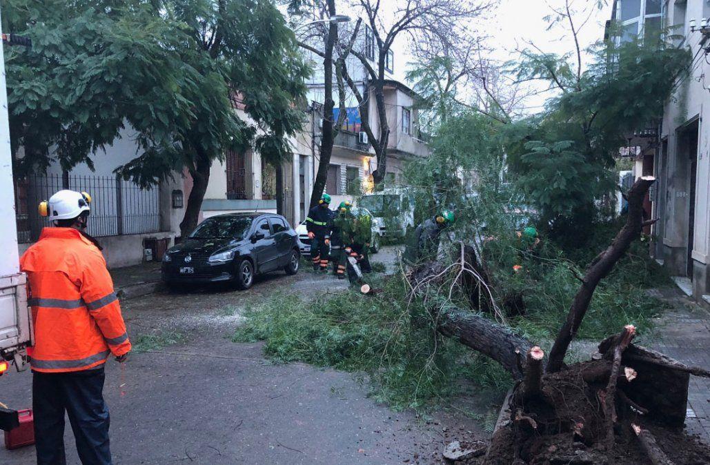 Árbol caído en la calle Bonpland