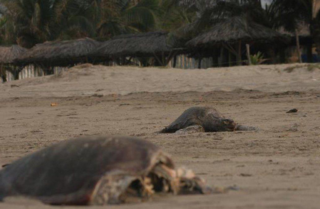 Hallan 122 tortugas muertas en playa del sur de México