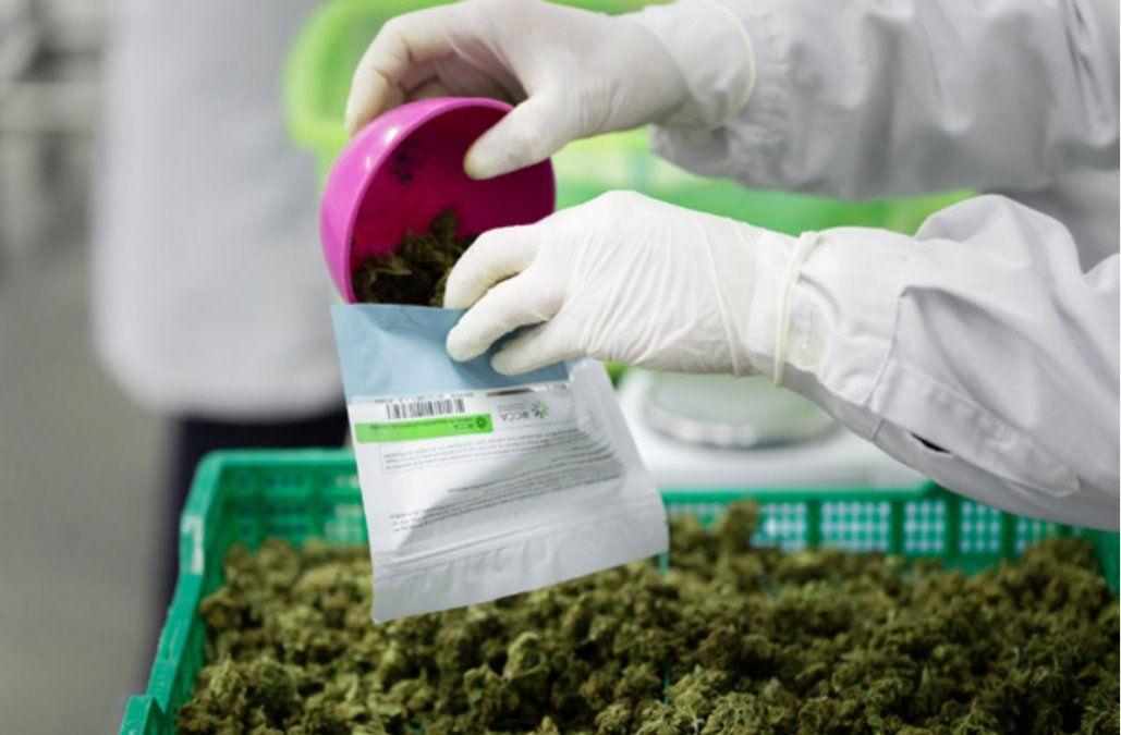 En el último año las farmacias vendieron 1,2 millones de gramos de marihuana