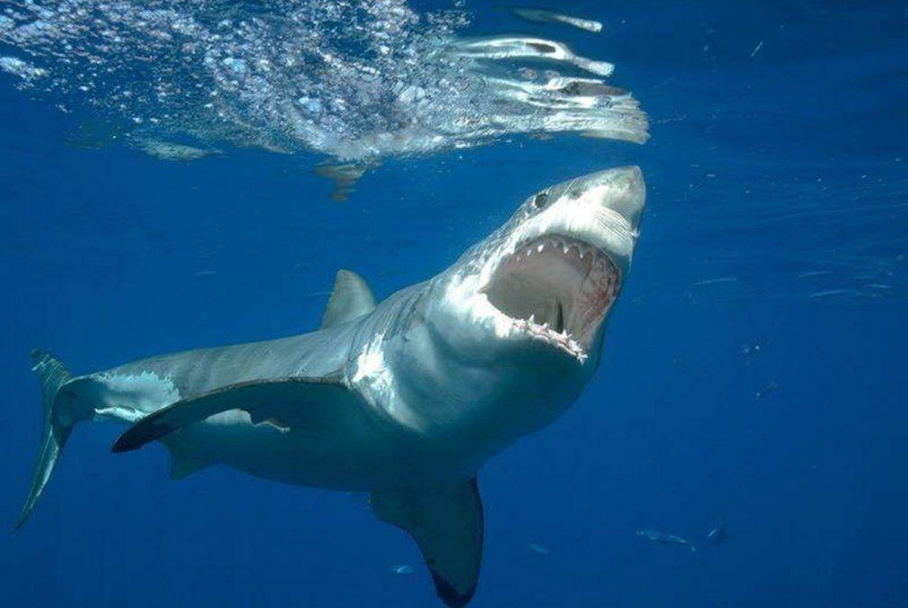 Joven nadador muere en un ataque de tiburón en Cape Cod