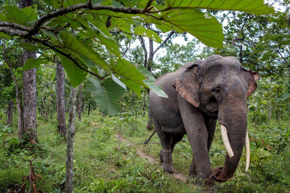 Una turista alemana muere aplastada por un elefante en un safari en Zimbabue
