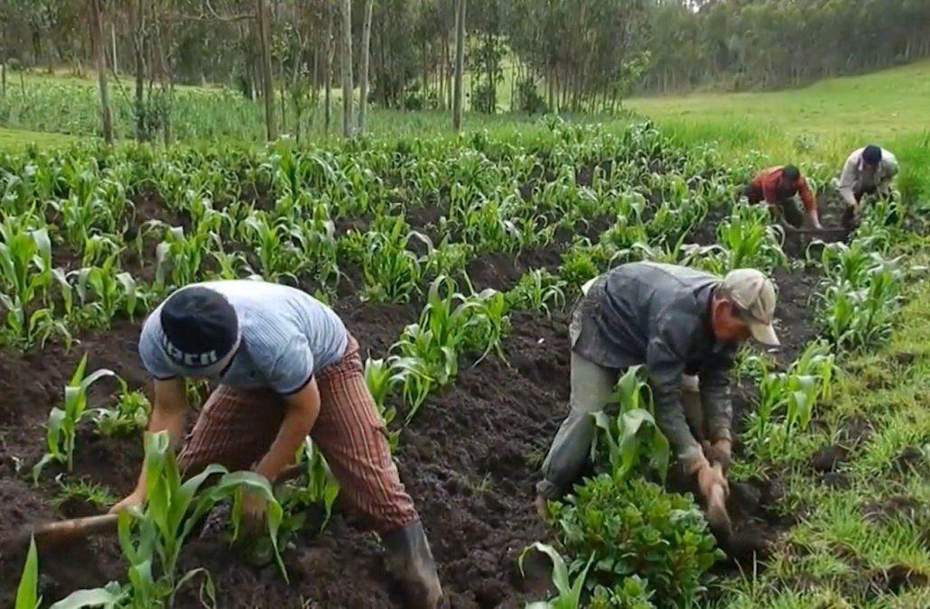 ACNUR propone a granjeros dar trabajo a campesinos centroamericanos
