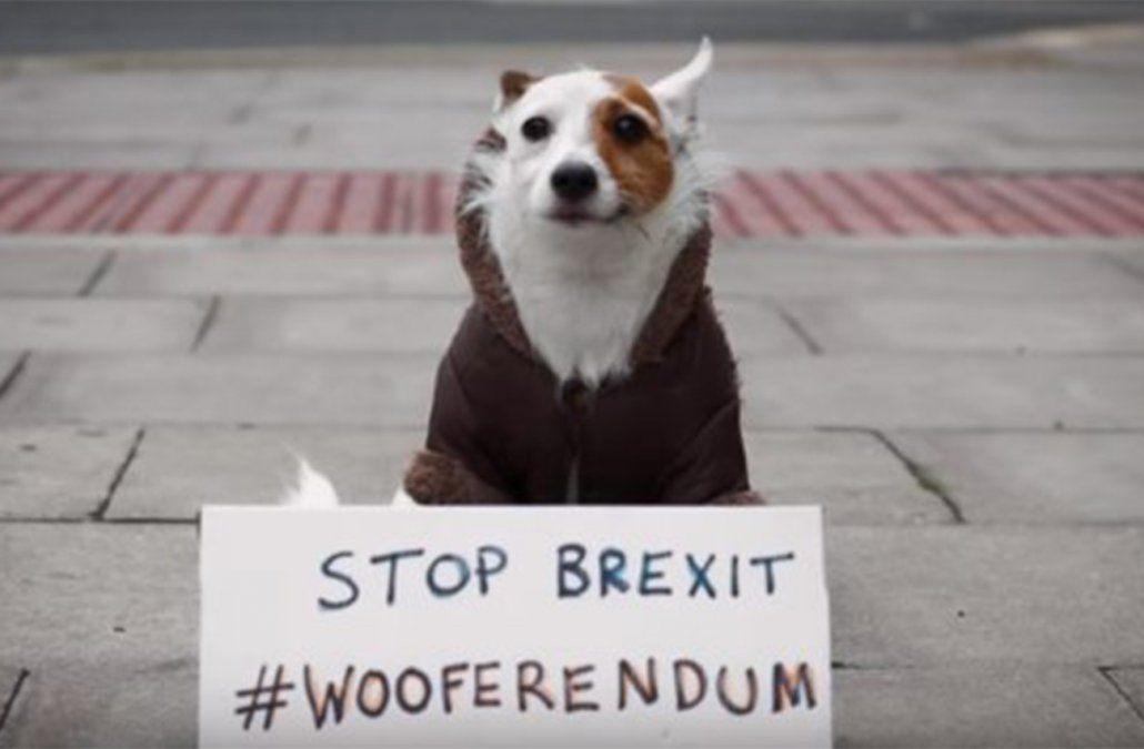 Perros opositores se concentran y marchan contra el Brexit