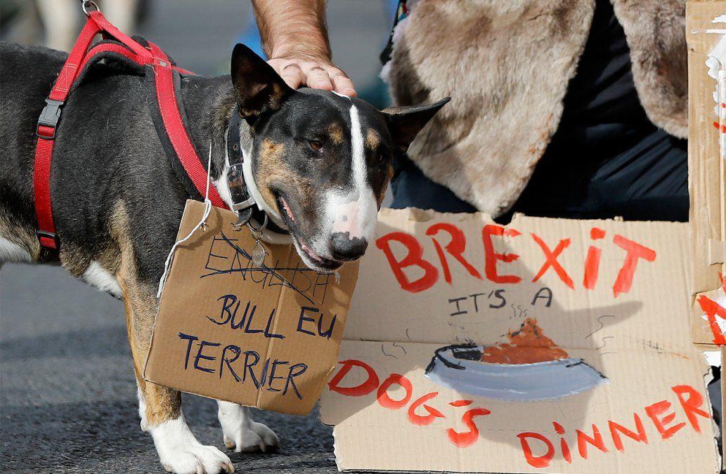 Miles de perros y sus dueños participan en la marcha anti Brexit en el centro de Londres.