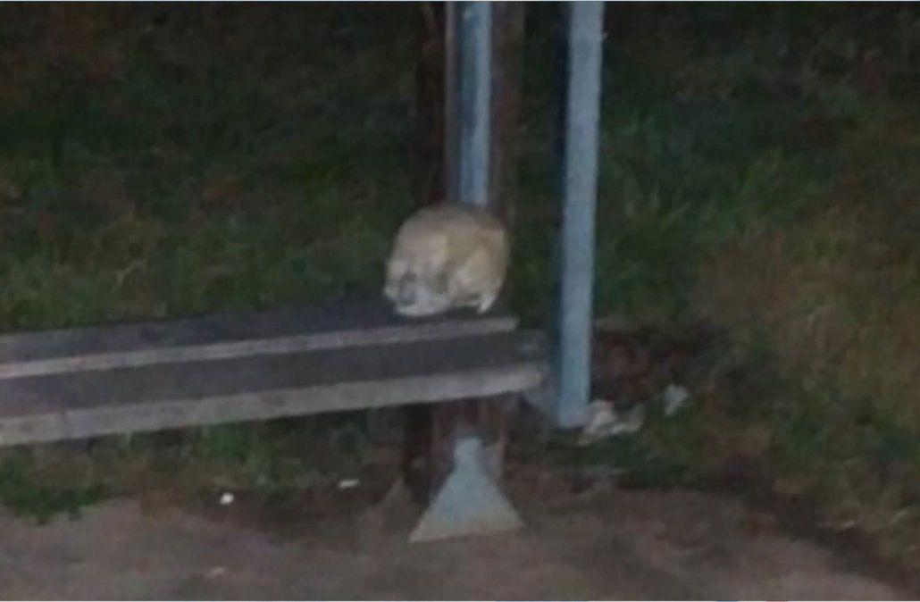 Encontraron un cráneo en una parada de ómnibus con un nombre escrito en la frente