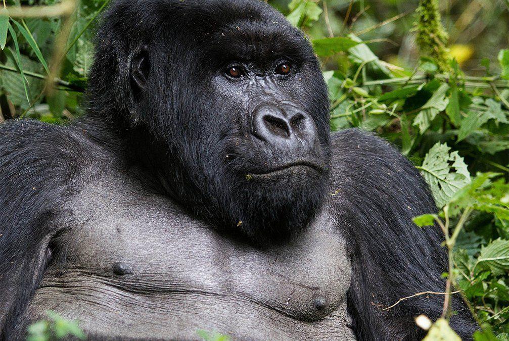 La Tierra perdió el 60% de sus animales salvajes en 44 años