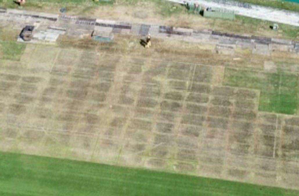 Vista aérea de la cancha este martes. El césped no estará óptimo para la final del Uruguayo.