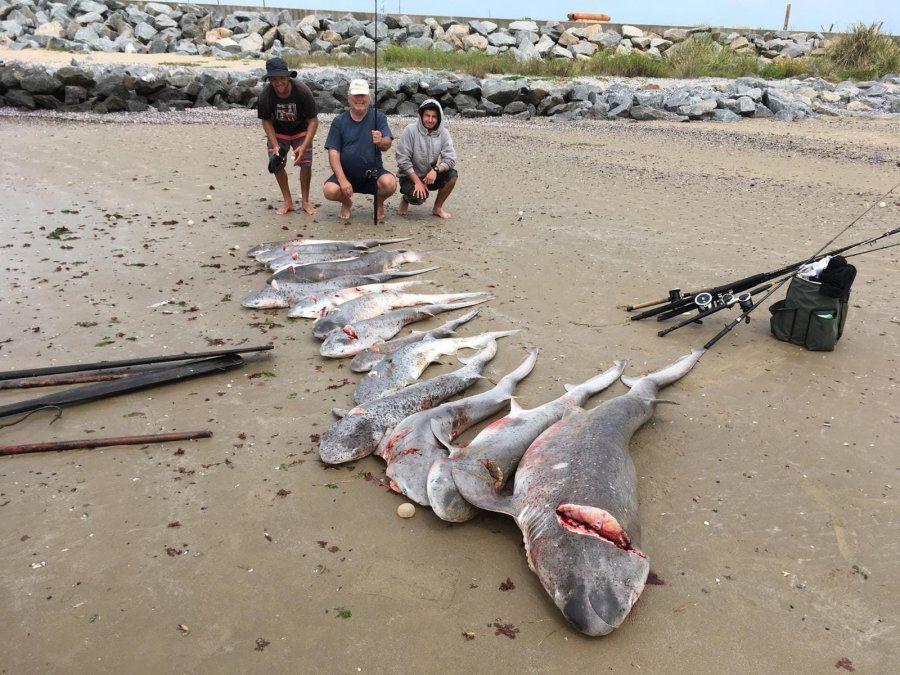 Pescadores en kayak atraparon un cardumen de tiburones en la costa de La Paloma