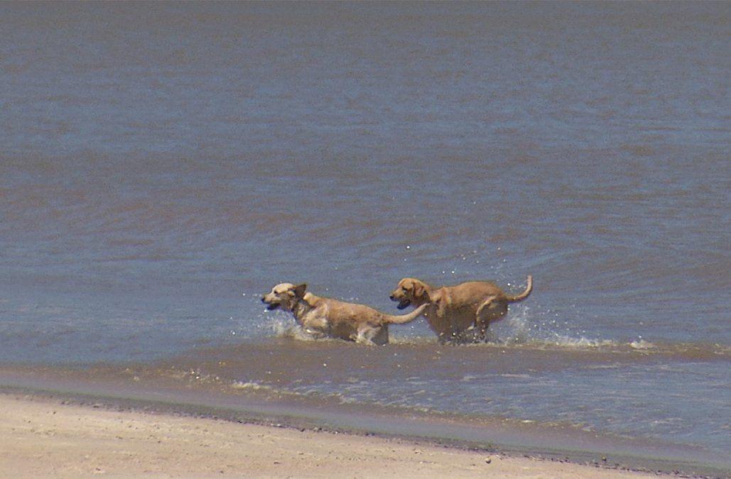 Multa de 4.354 pesos para quienes bajen con perros a playas de Montevideo