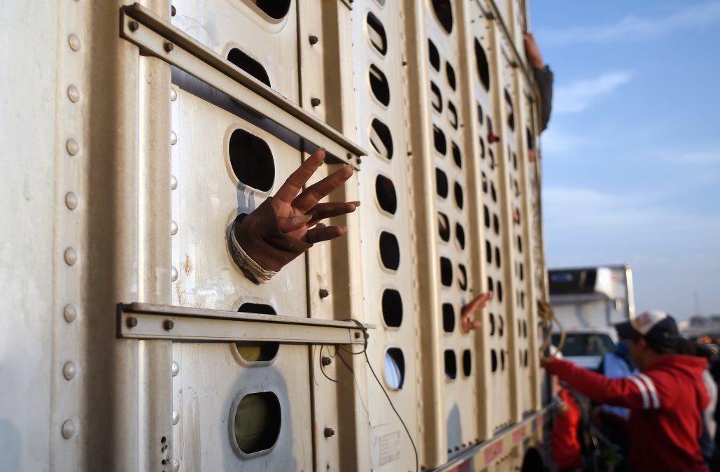 Una mujer que integra la caravana de migrantes hacia Estados Unidos saca su mano desde el interior de un camión en el que realiza parte del trayecto.
