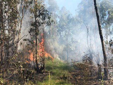 Varias dotaciones de bomberos combaten un incendio forestal en ruta 8