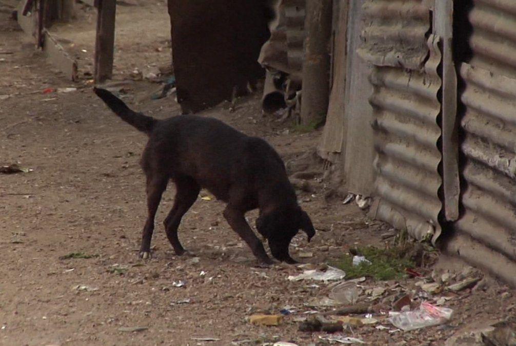 Fumigan en Salto por la Leishmaniasis y sacrifican a perros infectados