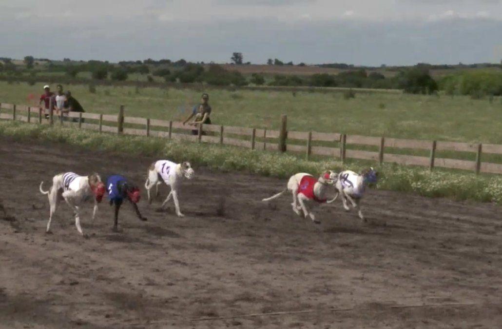 Gobierno presentó proyecto de ley para prohibir las carreras de perros
