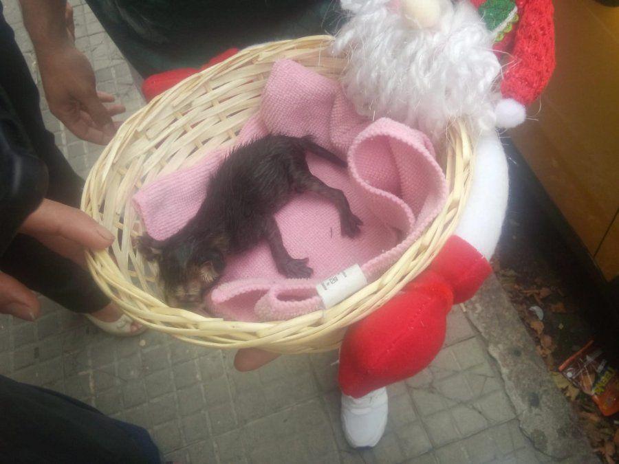 Bomberos rescataron a un gatito recién nacido que tiraron a un contenedor de basura
