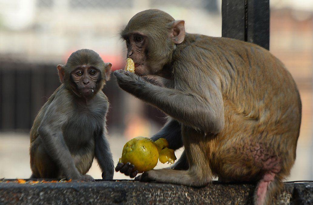 Seis detenidos en Vietnam por comerse a un mono mientras lo transmitían en Facebook