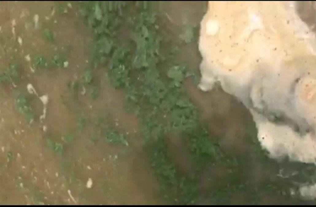 Las cianobacterias afectan a la Playa Mansa de Punta del Este y La Paloma en Rocha