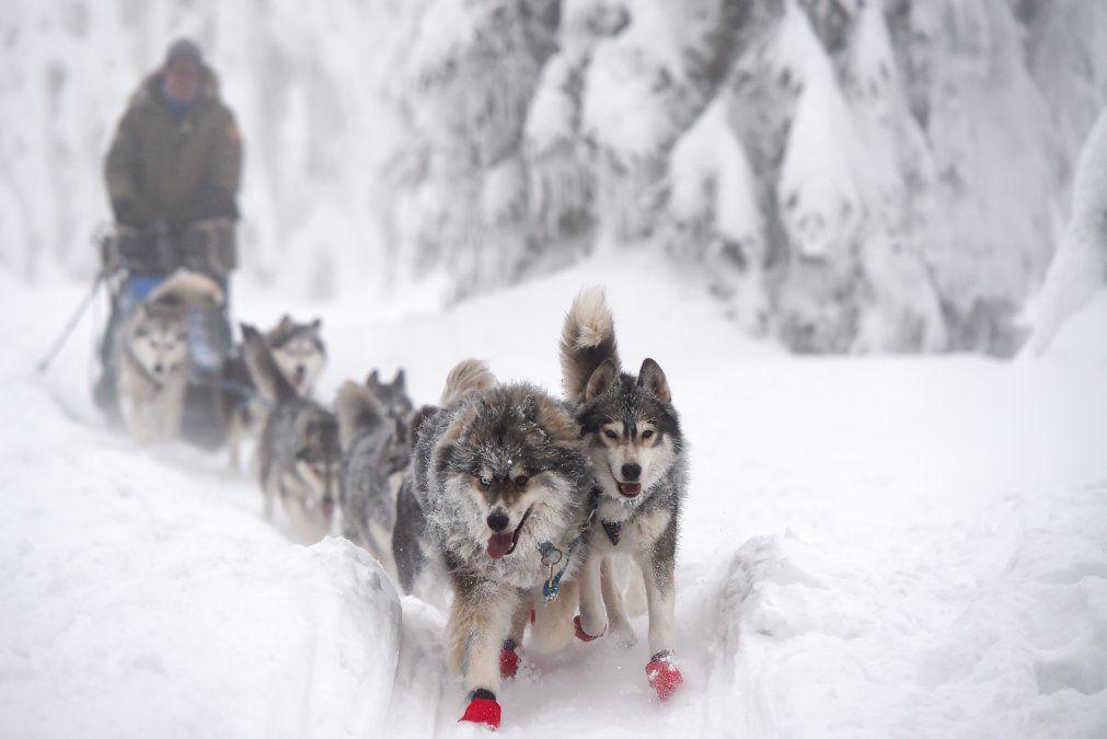 Un competidor monta su trineo tirado por perros durante la carrera de Sedivackuv