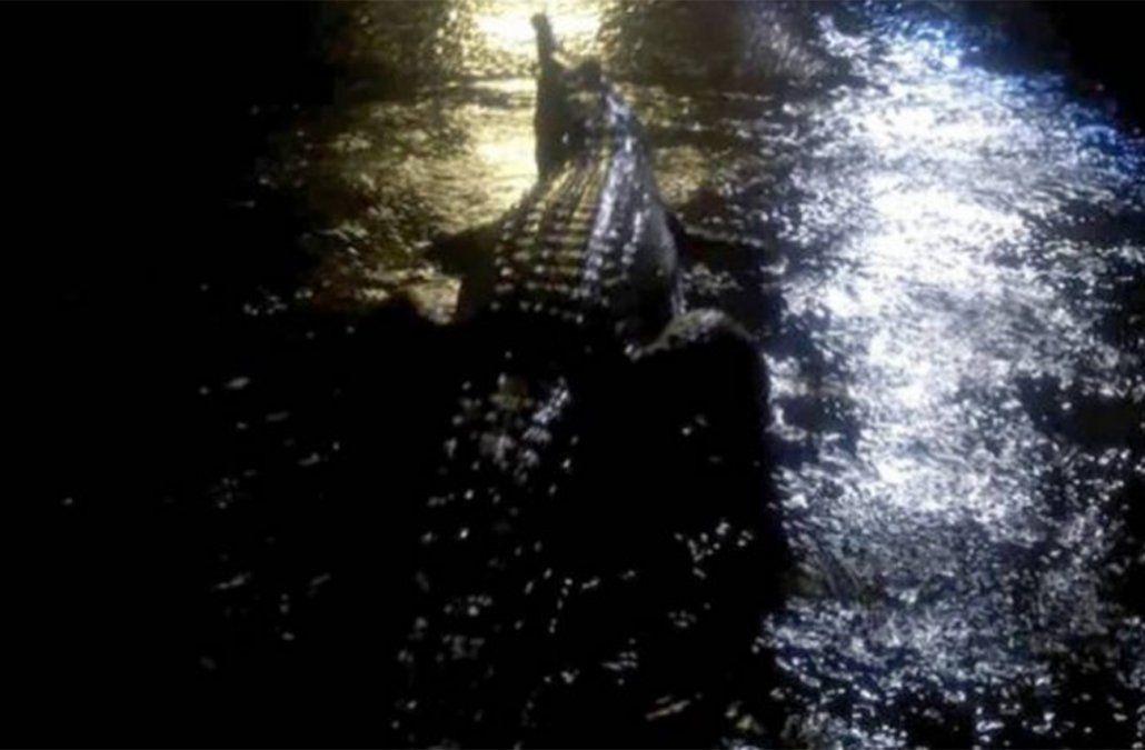Inundaciones en Australia traen cocodrilos a las calles