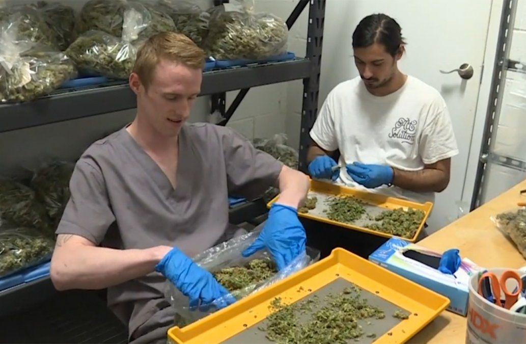 Demanda por cannabis oficial sigue superando la oferta: se vende en pocas horas