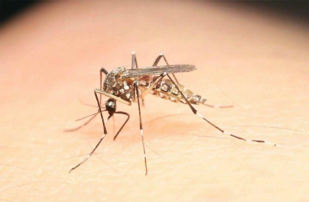 Se registraron tres casos de dengue y uno de chikungunya importados en lo que va del año