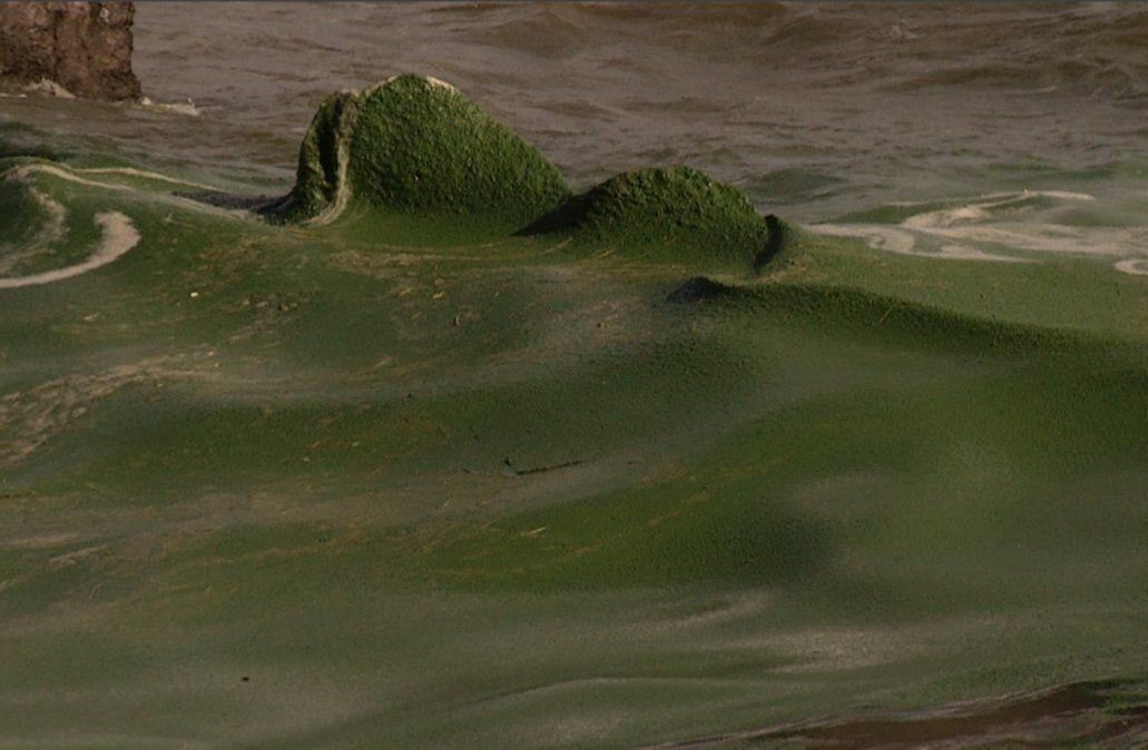 Importante concentración de cianobacterias tiñó de verde el agua de la rambla sur