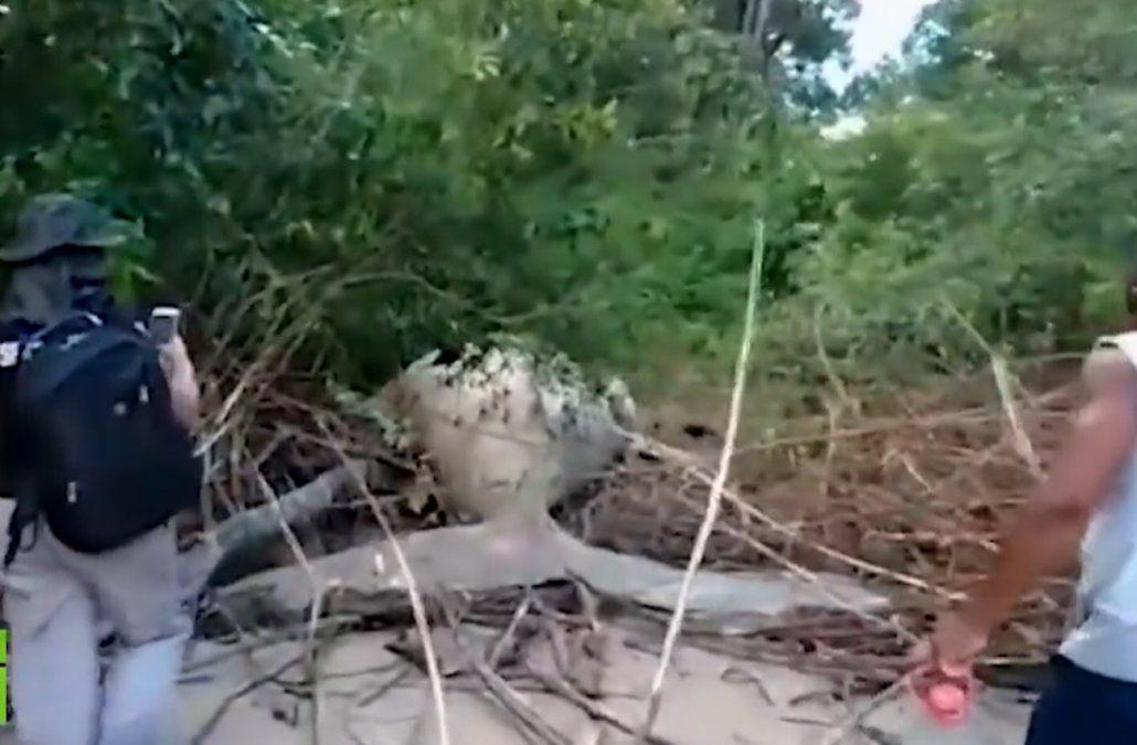 El extraño caso de la ballena que apareció en la selva del Amazonas, cerca de la costa