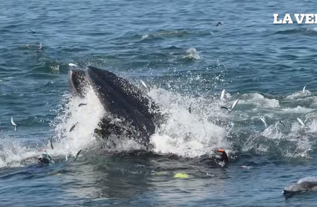Una ballena se tragó a un buzo en Sudáfrica que se salvó milagrosamente