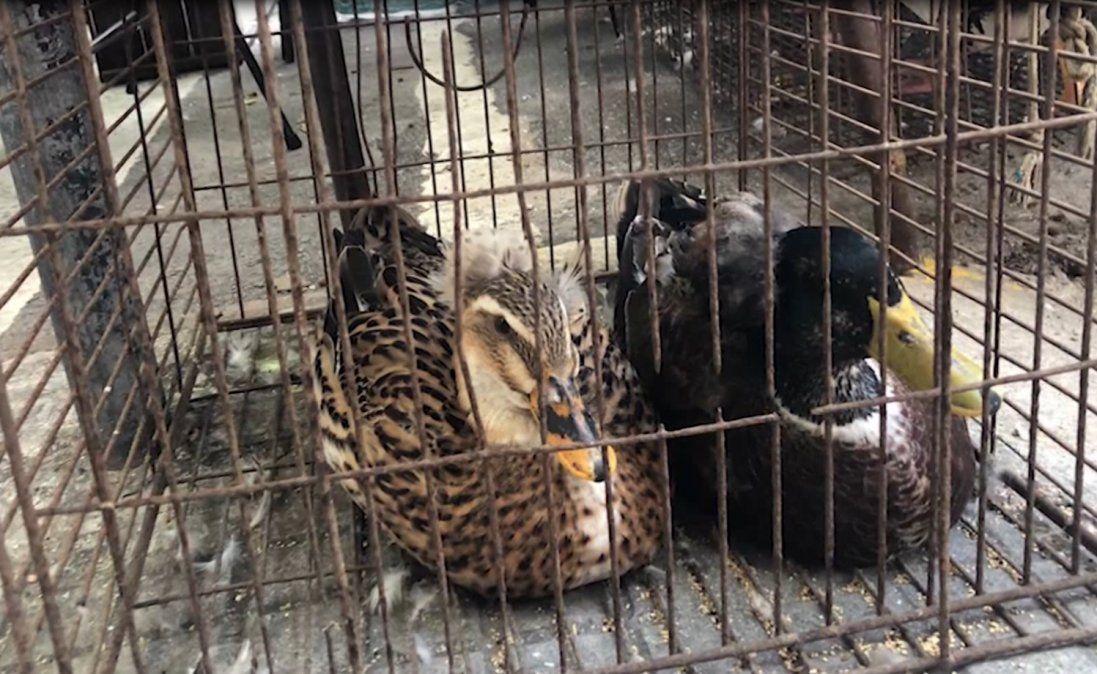 Incautan 200 aves exóticas que se iban a vender de forma ilegal