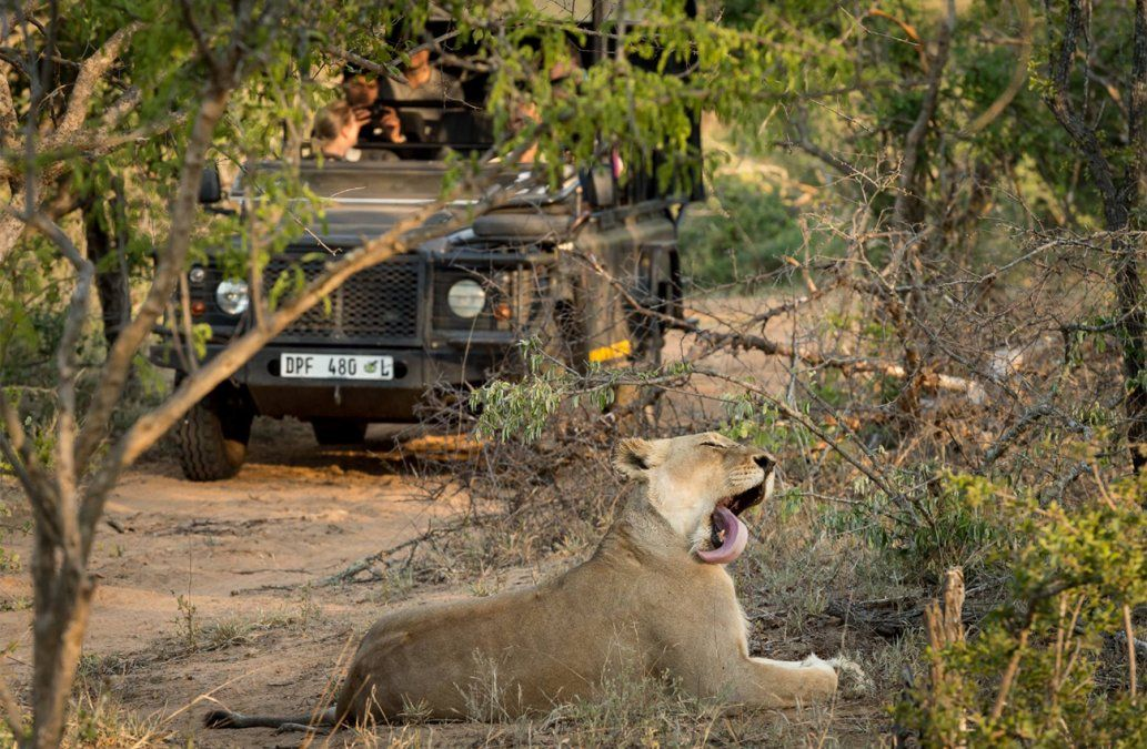 Archivo African Safari Group