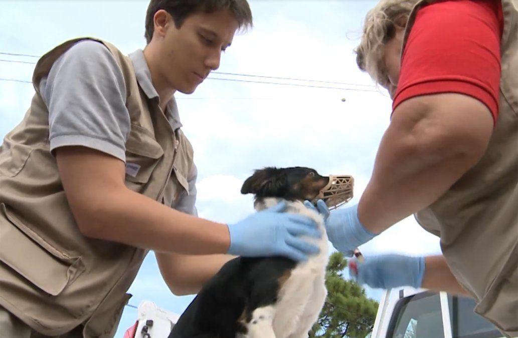 Podrán allanar viviendas para examinar si los perros son portadores de Leishmaniasis